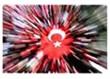 Her bayrak bir Mehmet... Her Mehmet bir bayrak...