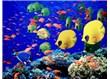 Haiku . 116: Balıklar