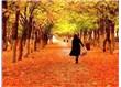 Eylül sarısı
