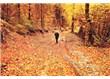 Süzme sözcükler 318: (Haiku) Dökülür yapraklar.