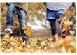 Sonbahar ( Güz ) zamanı
