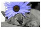 Çiçek ile pisicik