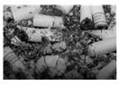 Sigarayı nasıl bıraktım?