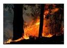 Büyük orman yangınlarına karşı 'kontrollü yangın' yöntemi