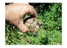 Bir minik kaplumbağa bahçede saklanmış