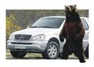 Otopark ayıları...