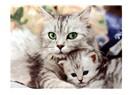 Kediler Tanrıdan bir mesajdır