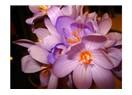 En güzel çiçek hangisidir?
