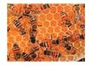 Arı kafilesi