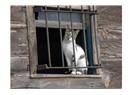 Penceredeki kedi