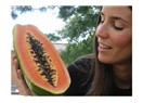 Papaya (carica papaya) yetiştiriciliği