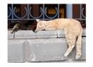 Sokak hayvanı portreleri: Serçe ve uykucu kedi