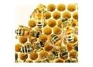 Arılar ve kıssadan hisse