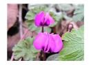 Bu çiçeğin adını biliyor musunuz?