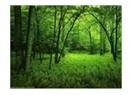 Ormanlarımızı koruyalım