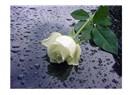 Kulağının arkasına beyaz güller tak
