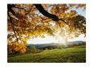 Ağacın felsefesi