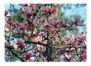 İlkbahar