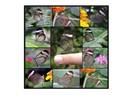 Kelebek misali hayat