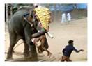 Fillerle Türkiye arasındaki ilişki ne olabilir ?