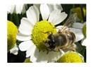 Böcek ve çiçek