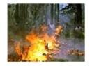 Yanan ormanlarla birlikte biz de yanıyoruz...