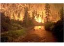 Ormanları Yakalım mı Söndürelim mi?