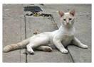 Bir Kedinin Ölümüne Tanık Olmak