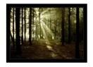 Aydınlığın, karanlığa karşı zaferi