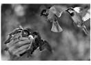 Duvakları yosunlu hatıralar