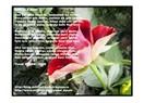 İnsan sevgisi konulu şiirim (İnsan Sevgisi)