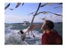 Denizin Kanatlıları