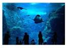 Denizaltı Fauna ve Florası