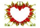 Yaşasın Sevgili(siz)ler Günü!...