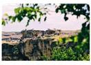 Nebiler ve sahabeler kenti Diyarbakır