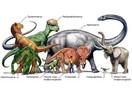 Evrim teorisi bir kez daha çökmüşmüş