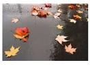 Sararan yaprakların bir tutkusu olmalı