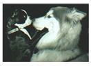Hayvanlarla konuşmak -5- Hayvanlara sorabileceğiniz sorular
