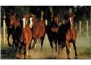 Atlar, insanlar, İstanbul...