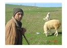 Adapazar' lı bir çobandan hayat üzerine yorumlar-1.Bölüm