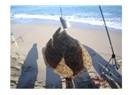 Balık, doğa ve dostluk…