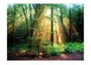 Ormanda yaşayan insanlar