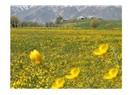 Bahar ile Kardelen