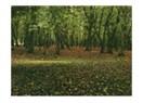 Orman hayali...