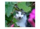 Sokak hayvanı portreleri: Çiçeklerin arasındaki silüet