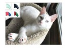 Tırmalamaya son: Kedi ve köpek için tırnak kapları