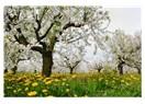 Bahar, yeni enerjiler ve adaptasyon süreci...