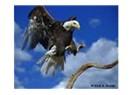 Yükseklerde uçmak