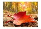 Takvim yaprakları bir bir düşüyor. ve son yaprak...