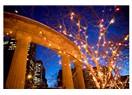 Montreal, Kanada, McGill, lapa lapa yağan kar, Tim Hortons kahvesi ve araştırma!